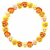 Pansy Orange Frame Circle