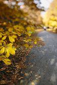 way at the autumn park,tilt-shift lens blur