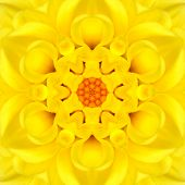 stock photo of kaleidoscope  - Yellow Mandala Concentric Flower Dahlia Kaleidoscope Center - JPG
