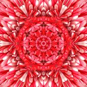 picture of kaleidoscope  - Red Mandala Concentric Flower Kaleidoscope Center - JPG