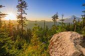Beautiful Vista Of Mount Hood In Oregon, Usa.