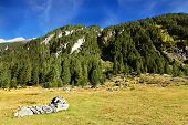 Green meadows in the valley and coniferous forests on the hills. Sunny day in the Austrian Alps