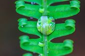 Water Drops On Green Fern Leaves