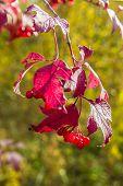 Branch of berries