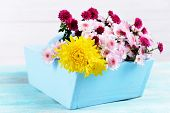 Beautiful flowers in box on table on light background