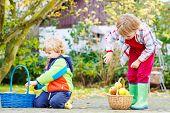 Two Cute Little Boys Harvesting Apples In Home's Garden