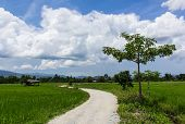 Road Cottage And Green Rice Field In Thailand, Asia