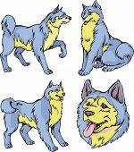 Laika Dogs