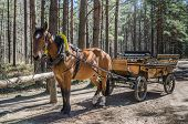 image of carriage horse  - Horse - JPG