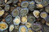 stock photo of oyster shell  - detail of a group of open oysters - JPG