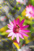 Beautiful flowers, close-up