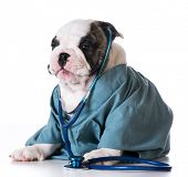 picture of vet  - veterinary care  - JPG