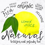 picture of 1950s style  - Vector illustration of lemon in imitation of watercolor - JPG