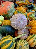 Pumpkins in autumn