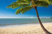 pic of palm  - Single palm tree at Palm Cove beach in north Queensland - JPG