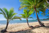 stock photo of palm  - Palm trees at tropical Palm Cove beach in north Queensland - JPG