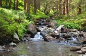 image of coniferous forest  - A mountain river and beautiful coniferous forest - JPG