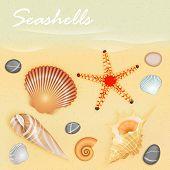 image of starfish  - seashells and starfish on the beach vector - JPG