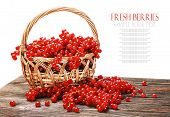 stock photo of berries  - fresh berries red currant in a basket isolated on a white background - JPG