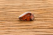 stock photo of tigers-eye  - Piece of pietersite originating from Namibia Africa on oak surface - JPG
