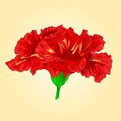 foto of hibiscus flower  - Flower red hibiscus blossom simple tropics flower vector illustration - JPG
