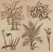 foto of freehand drawing  - Flowers Trees Plants - JPG