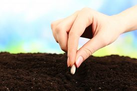 stock photo of land development  - Female hand planting white bean seed in soil on blurred background - JPG
