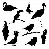 Постер, плакат: Set Of Birds