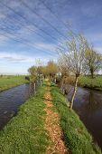 Wanderweg und Pollard Weiden in der Groene hart