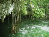 stock photo of cenote  - cenote lake in Riviera Maya jungle mayan Quintana Roo - JPG