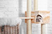 Cute kitty on cat tree at home poster