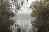 Névoa de manhã cedo no Okefenokee Swamp, Geórgia