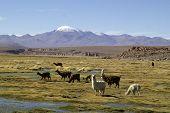 Paisaje boliviano