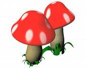 mushrooms 01