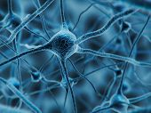 3d Illustration Of Neuron Cells Or Nerve System. Synapse And Neuron Cells Sending Electrical Chemica poster