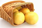 image of tangelo  - Fresh Oranges rolling out of wicker basket - JPG