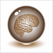Vector brain illustration. Simply change. Other medical vectors you can see in my portfolio.