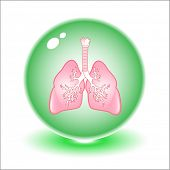 Vector lungs illustration. Simply change. Other medical vectors you can see in my portfolio.