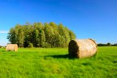 Coils Of Hay On A Green Meadow, Copse And Cloudless Blue Sky - Blur And Contrasting Colors poster