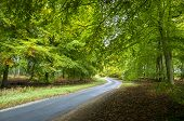 Road Through Beech Trees, Santon Downham, Norfolk, Uk In Autumn