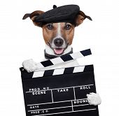 Film klepel Board Director hond