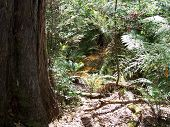 Australian Forest With Creek