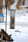 Winter Birds Feeding in New England