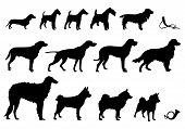 stock photo of laika  - Set of Vector Silhouettes hunting dogs and hunting horns - JPG