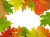 Autumn Very Close
