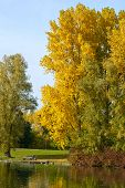 pic of bonnes  - Rheinaue a leisure park in autumn on the banks of the Rhine in Bonn Germany - JPG