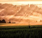 Sun Ray And Field Way