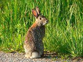 Goofy Rabbit
