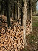 Ronnie's Woodpiles