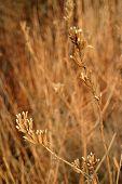 Dry Wildflower